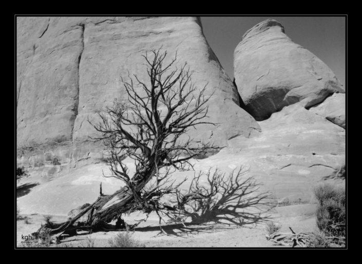 Dead Tree (5)