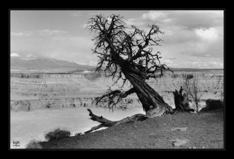 Dead Tree (2)