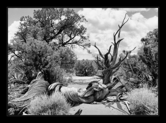 Dead Tree (4)