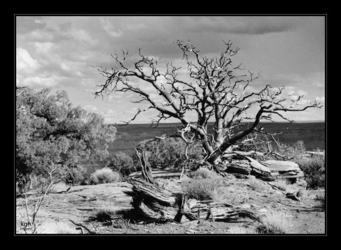 Dead Tree (1)