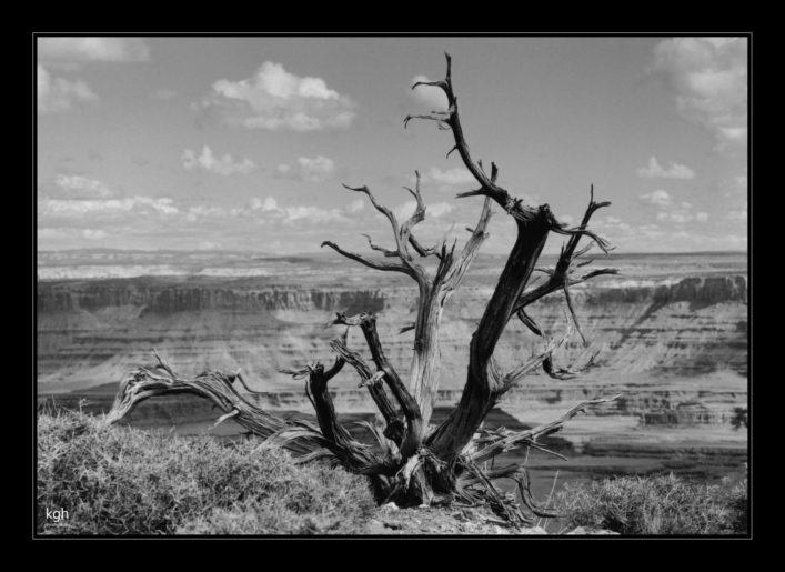 Dead Tree (3)