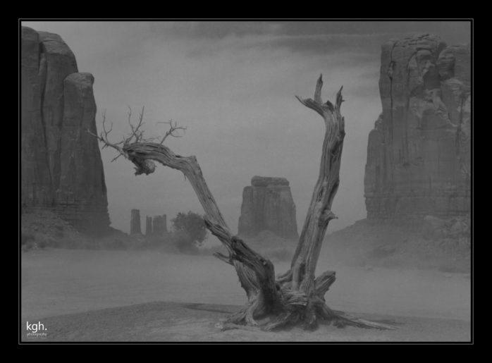 Dead Tree in Sandstorm