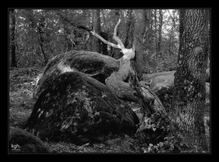 Menhir (3)