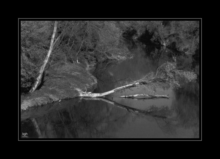 Dead Tree by the Danube