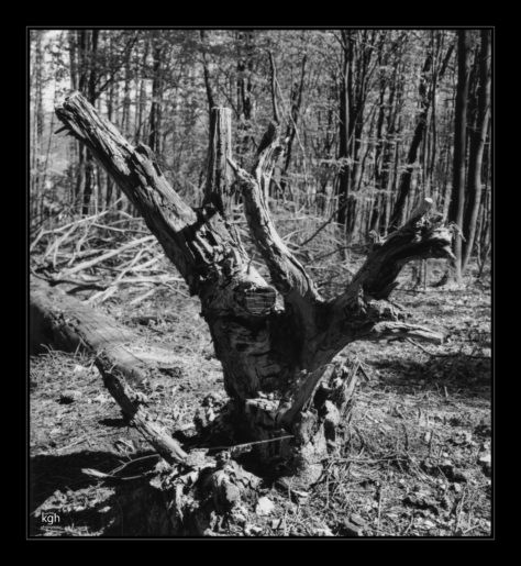 Stump (1)