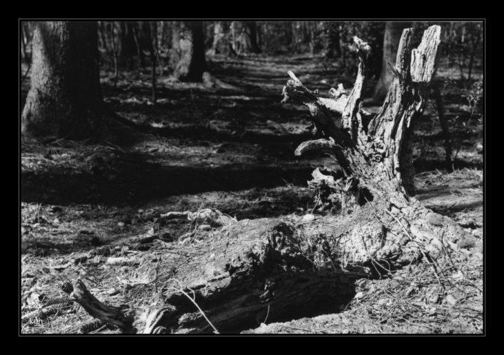 Stump (2)