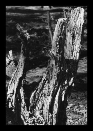 Stump (3)
